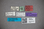 3048334 Stenus subguttatus ST labels2 IN