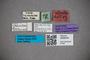 3048334 Stenus subguttatus ST labels IN