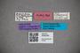 3048335 Stenus subleptocerus HT labels2 IN