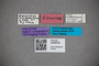 3048335 Stenus subleptocerus HT labels IN