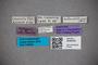 3048339 Stenus submetallicus ST labels IN