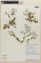 Rorippa dubia (Pers.) H. Hara, COSTA RICA, M. H. Grayum 10120, F