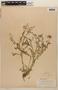 Rorippa mexicana (DC.) Standl. & Steyerm., COSTA RICA, J. Donnell Smith 3076, F