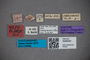 3048343 Stenus sulcipennis ST labels2 IN