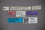 3048344 Stenus sutteri ST labels IN