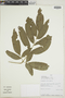 FernsFrom Past to Present, funded by the Institute ofMuseum and Library Services (Award No.MA-30-13-0544-13).