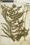 Ferns From Past to Present, funded by the Institute of Museum and Library Services (Award No. MA-30-13-0544-13).