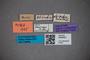 3048351 Stenus taurops HT labels2 IN