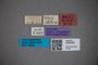 3048358 Stenus tibialis ST labels2 IN