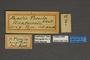 95235 Papilio tonila HT labels IN