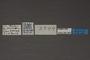 95489 Hemerocampa wardi PT labels IN