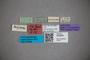 3048360 Stenus toripennis ST labels2 IN