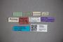 3048360 Stenus toripennis ST labels IN