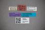 3048362 Stenus trifidus ST labels2 IN