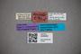3048362 Stenus trifidus ST labels IN