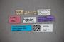 3048363 Stenusm trigeminus HT labels2 IN
