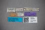 3048364 Stenus tristiculus ST labels IN