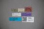 3048367 Stenus tuberosicollis ST labels IN