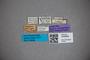 3048368 Stenus turneri ST labels IN
