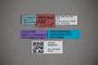 3048372 Stenus umbrosus HT labels IN