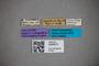 3048373 Stenus unicus HT labels IN