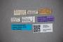 3048374 Stenus usambarae HT labels IN