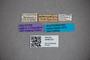 3048375 Stenus utzungweanus HT labels IN