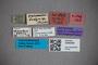 3048380 Stenus vermicularis LT labels2 IN