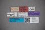 3048381 Stenus vernaculus ST labels2 IN