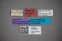 3048388 Stenus voraginosus ST labels2 IN