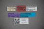 3048388 Stenus voraginosus ST labels IN