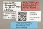 3130474 Pipunculus penai HT labels IN