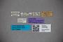 3048386 Stenus zukwalanus ST labels IN