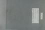 PE 80397 label