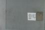PE 80541 label