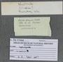 IMLS Silurian Reef Digitization Project, Image of a Silurian specimen label PE 77338