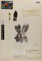 Virola urbaniana Warb., BRAZIL, A. F. M. Glaziou 22036, Isotype, F