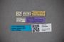 3048406 Oxytelus sumatrensis ST labels IN