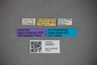 3048407 Diochus formicetorum ST labels IN