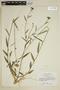 Sida linifolia Juss. ex Cav., Brazil, H. S. Irwin 2052, F