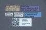 3048040 Philonthus pulcher ST labels IN