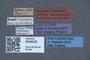 3048035 Philonthus jenseni LT labels IN