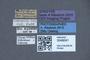 3048041 Philonthus quadricolor ST labels IN