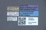 3048047 Philonthus viridiniger ST labels IN