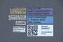 3048042 Philonthus riedeli HT labels IN