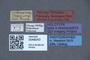 3048043 Philonthus ruficauda HT labels IN