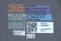 3048046 Philonthus tristipennis ST labels IN
