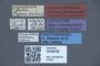 3048036 Philonthus jujuyensis LT labels IN