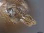 2822024 Aphaenogaster rudis p 2 IN