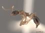 2822024 Aphaenogaster rudis p IN